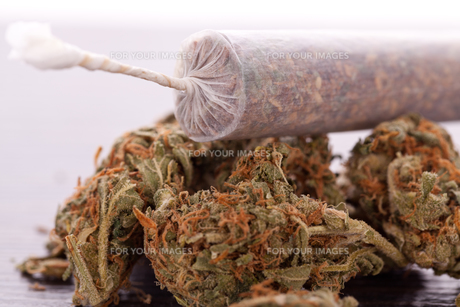 dried cannabis flowers grass with joint smoking kiffenの写真素材 [FYI00760389]