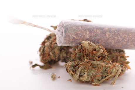 dried cannabis flowers grass with joint smoke kiffenの写真素材 [FYI00760390]