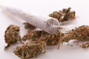 dried cannabis flowers grass with joint smoking kiffenの写真素材 [FYI00760397]