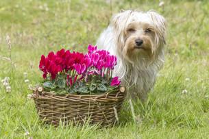 home_animalsの写真素材 [FYI00760557]