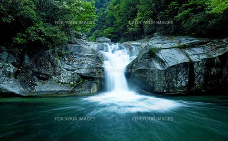 Large rain forest waterfallの素材 [FYI00761123]