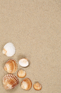 beach scene sandy beach on vacation with shells and copy spaceの写真素材 [FYI00761275]