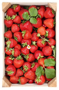 strawberries berry fruits in wooden box harvest from aboveの素材 [FYI00761282]