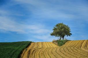 farmland and cornfield with tree on the horizonの素材 [FYI00761449]