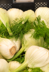 fennelの写真素材 [FYI00761501]