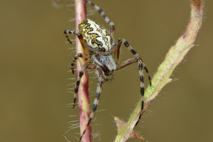 insects_spidersの写真素材 [FYI00761592]