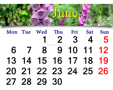 calendar for May 2016 with lilac bluebellsの写真素材 [FYI00762067]