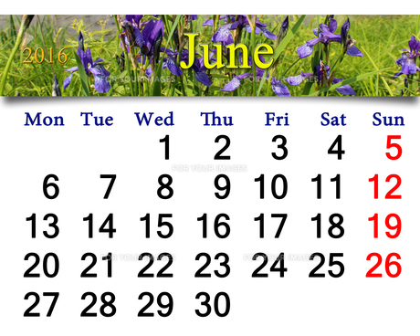 calendar for June 2016 with image of blossoming irisの写真素材 [FYI00762076]