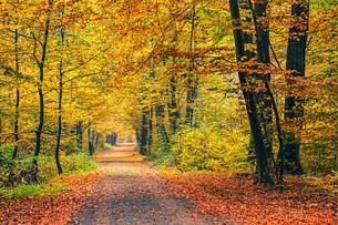 Autumn forestの素材 [FYI00762737]