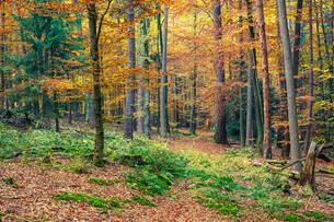 Autumn forestの素材 [FYI00762740]
