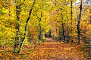Autumn forestの素材 [FYI00762754]