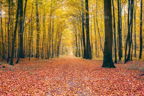 Autumn forestの素材 [FYI00762759]