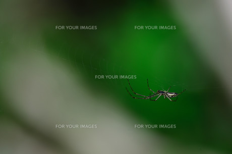 small spider and greenの素材 [FYI00764392]