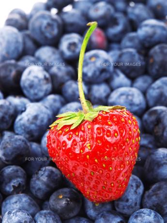 Strawberry on blueberries background,Strawberry on blueberries background,Strawberry on blueberries background,Strawberry on blueberries background,Strawberry on blueberries background,Strawberry on blueberries background,Strawberry on blueberries backgroの素材 [FYI00764697]