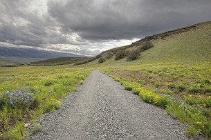 Hiking Trail on Columbia Hills State Parkの写真素材 [FYI00764946]