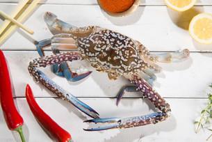 Raw blue crabの写真素材 [FYI00764998]