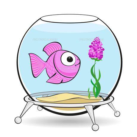 pink fish in fishbowlの写真素材 [FYI00765736]