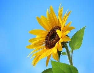 plants_flowersの写真素材 [FYI00766038]