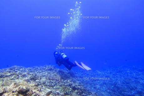 宮古島の海中を泳ぐダイバーの写真素材 [FYI00766116]