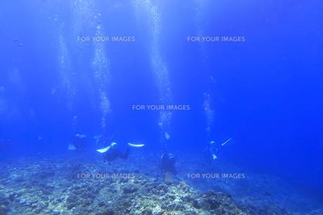 宮古島の海中を泳ぐダイバーの写真素材 [FYI00766119]