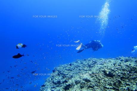 宮古島の海中を泳ぐダイバーの写真素材 [FYI00766120]
