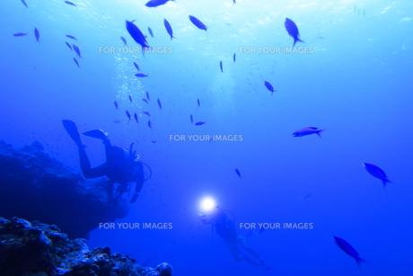 宮古島の海中を泳ぐダイバーの写真素材 [FYI00766121]