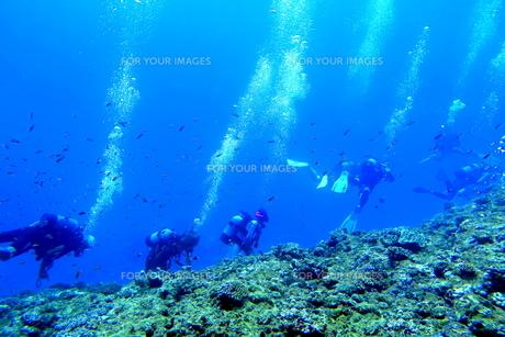 宮古島の海中を泳ぐダイバーの写真素材 [FYI00766122]