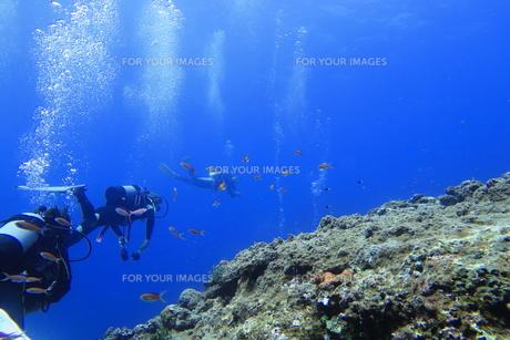 宮古島の海中を泳ぐダイバーの写真素材 [FYI00766123]