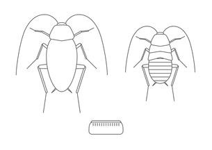 ゴキブリ アイコンのイラスト素材 [FYI00766145]