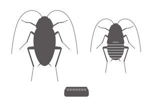 ゴキブリ アイコンのイラスト素材 [FYI00766146]
