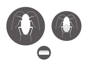 ゴキブリ アイコンのイラスト素材 [FYI00766147]