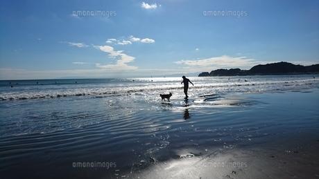 初秋の海遊びの写真素材 [FYI00766473]