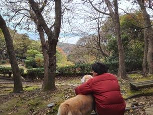 犬と眺めるの写真素材 [FYI00767060]