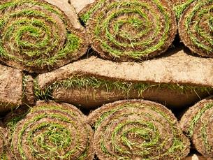 Turf grass rolls,Turf grass rolls,Turf grass rolls,Turf grass rollsの写真素材 [FYI00767364]