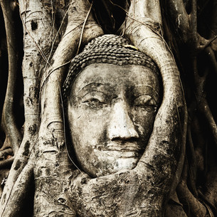 Head of Buddha under a fig tree, Ayutthaya,Head of Buddha under a fig tree, Ayutthaya,Head of Buddha under a fig tree, Ayutthaya,Head of Buddha under a fig tree, Ayutthaya,Head of Buddha under a fig tree, Ayutthaya,Head of Buddha under a fig tree, Ayutthaの素材 [FYI00767500]