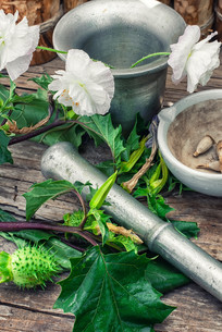 stems of herbaceous medicinal plants genus datura nightshade family with poppy seeds on the background mortar with pestle.selective focusの写真素材 [FYI00768954]