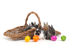easter bunnyの写真素材 [FYI00769315]