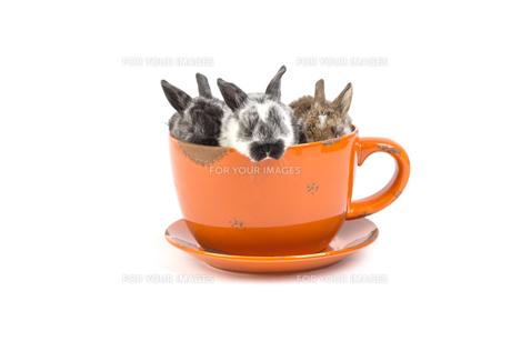 easter bunnyの写真素材 [FYI00769319]