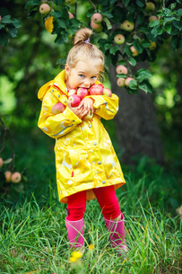 Little girl in the apple gardenの素材 [FYI00770035]