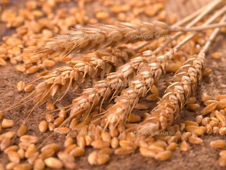 Wheat,Wheat,Wheat,Wheatの写真素材 [FYI00771859]