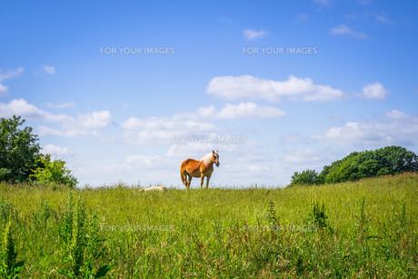 Horse standing on an idyllic meadowの写真素材 [FYI00771947]