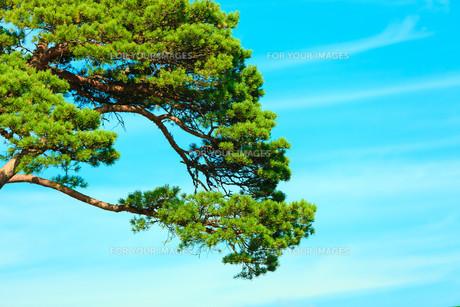 environmentの写真素材 [FYI00772494]