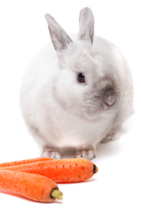 White rabbit,White rabbit,White rabbit,White rabbit,White rabbit,White rabbit,White rabbit,White rabbit,White rabbit,White rabbit,White rabbit,White rabbit,White rabbit,White rabbit,White rabbit,White rabbitの素材 [FYI00773154]