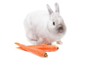 White rabbit,White rabbit,White rabbit,White rabbit,White rabbit,White rabbit,White rabbit,White rabbit,White rabbit,White rabbit,White rabbit,White rabbit,White rabbit,White rabbit,White rabbit,White rabbitの素材 [FYI00773160]