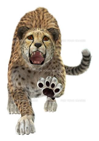 Cheetahの写真素材 [FYI00774507]