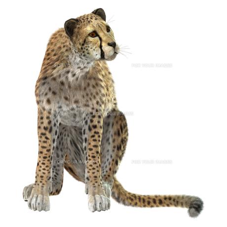 Cheetahの写真素材 [FYI00774525]