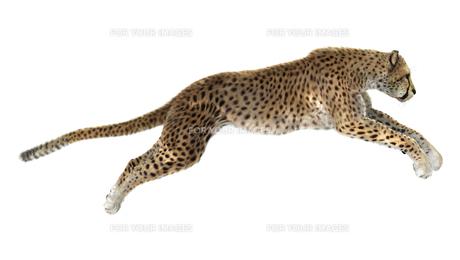 Cheetahの写真素材 [FYI00774526]