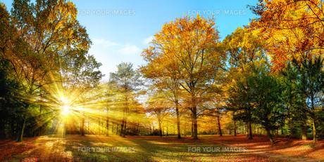idyllic nature park in autumn with sunshineの写真素材 [FYI00775118]