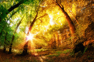 magic forestの素材 [FYI00775134]