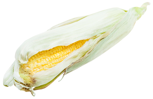 ear of corn with yellow seeds and green leavesの写真素材 [FYI00776375]